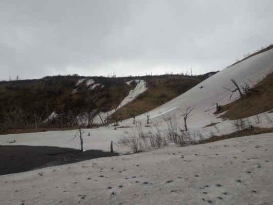 na sněhu ve stráni v pozadí odváděla medvědice dvě medvíďata, dost prskala