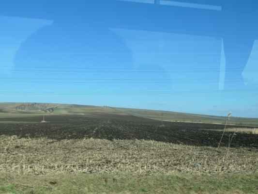 fotím z okna busu stádo srního před Šakvicemi .....