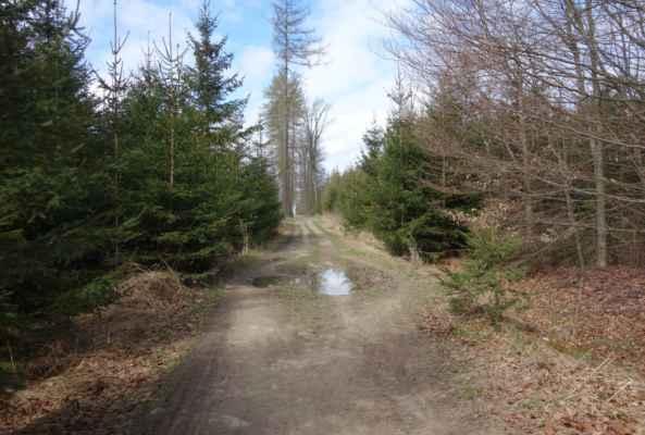Lesní cesty byly chvílemi příjemné, ale chvílemi se jet nedalo.