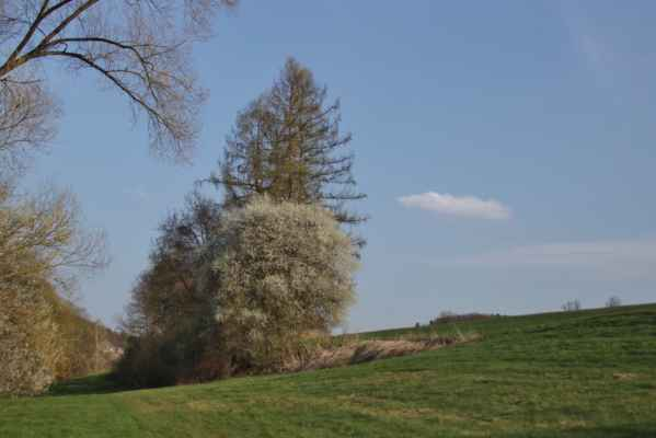 Jaro na Benešovsku - Kvetou trnky