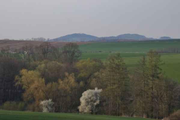 Jaro na Benešovsku - Začínají se zelenat vrby a modříny