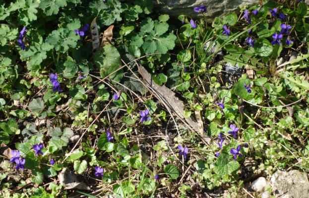 A když už máme to jaro, tak trošku jarního kvítí.