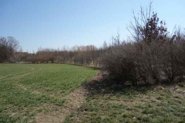 Další směr toku potoka lze vypozorovat jen podle ochranného biotopu.