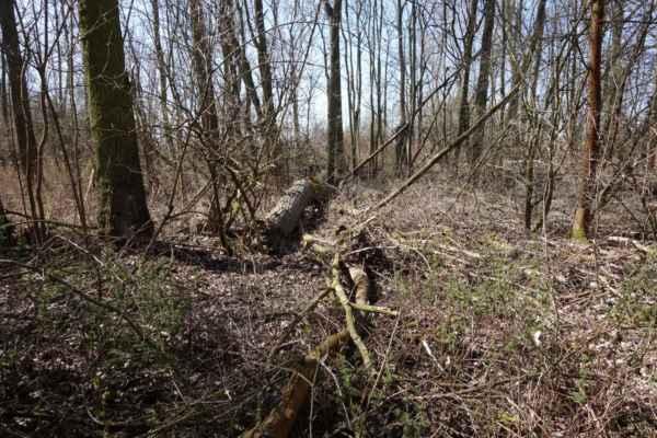 Podle stavu lesa to v okolí vypadalo na mokřady, ale to možná bylo. Dneska tady bylo sucho.