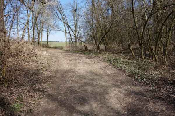 Tady už ale vede docela široká cesta podél potoka. Místy zpestřená kamenitými úseky.