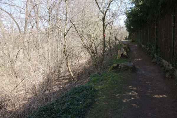 Litovický potok je vlevo a podle porostu tu bývaly mokřady. Teď je všude jen seschlé rákosí.