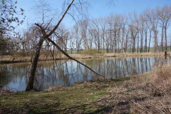 Malý rybníček bez jména před Břevským rybníkem.