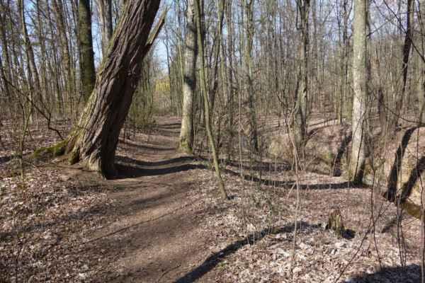 zase na lesní cestu podél potoka.