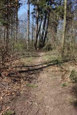 a vrhám se do lesa. Nebyla jsem si jistá, kam dojedu, ale odvážnému štěstí přeje :o)))