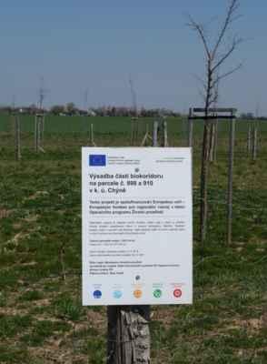 A cedule u čerstvě vysázených stromků naznačuje, že bych se opravdu mohla nacházet v blízkosti prameniště.
