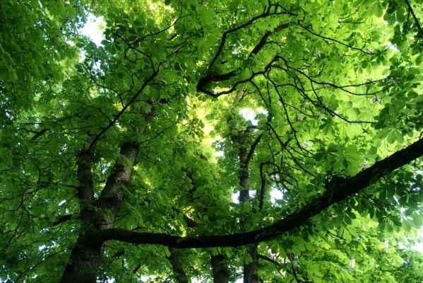 Všude krásná svěží jarní zeleň Foto Iveta