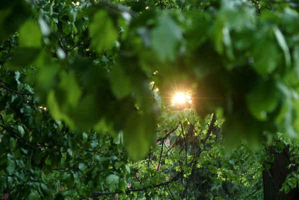Sluníčko mezi listy stromů Foto Iveta