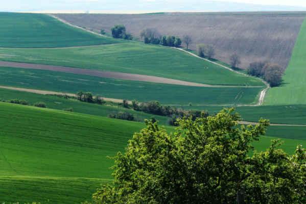 Za chvíli pojedeme na protější kopec po cestě okolo stromů - má tam být výhled na Šardické biopásy.... Foto Iveta