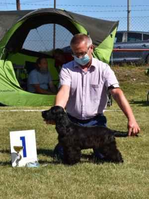 SUKY/FEMALE - TRIEDA MLADŠÍ DORAST/MINOR PUPPY CLASS VN1, najkrajší mladší dorast sučka / VP 1, best minor puppy female                     HOSHI BLUE VALLEY OF DOGS, W PRZYGOTOWANIU, 21.02.2020  O: CLARAMAND ONCE AGAIN M: FANTAZJA BLUE VALLEY OF DOGS CH: BRZEZIŃSCY RENATA WALDEMAR MAJ: BRZEZIŃSCY RENATA WALDEMAR
