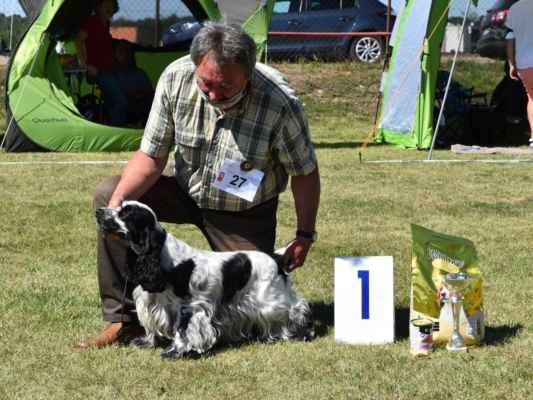 V1, CAC, najkrajší poľovný pes / Exc 1, CAC, best working male                     AARON SKAR-LINE COLOUR RANGE, CLP/AC/38927, 23.05.2018  O: ICH ELDORADO SKAR-LINE COLOUR RANGE M: CH ZITA SKAR-LINE COLOUR RANGE CH: ŠKAREK LADISLAV MAJ: ŠKAREK LADISLAV