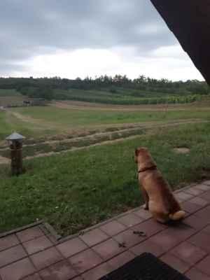 Jako snad na každé dovolené nám alespoň jeden den prší. Tessinka asi lituje v dálce koně, že na ně prší.