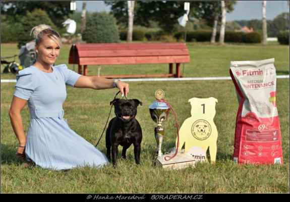 Because I Love You Terrystaff (Joli Kaf du Domaine d´Ishtar X Daddy´s Little Girl Bullparraben) - Vítěz speciální výstavy - feny, BOB