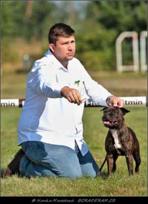 Iron Dog West Palami (Richy Rich Impossant Bohemia X Hennessy Heart West Palami) - Psi - třída mladých - V2
