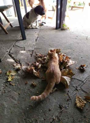 19.9.2020 - Pozdrav od Oli, dnes už Rezi. Kočička je silná a zdravá. Včera jsme byli na kastraci, fotky z dnešního rána. Je jak živé stříbro, vlastně bronz ... :-)