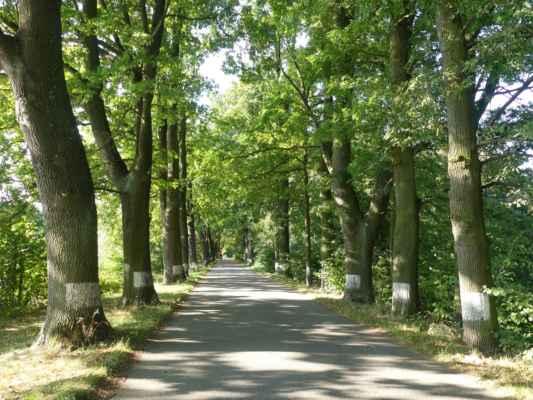 Na hrázi rybníka Stávek a pokračujeme po silnici dál na Stříbřec.