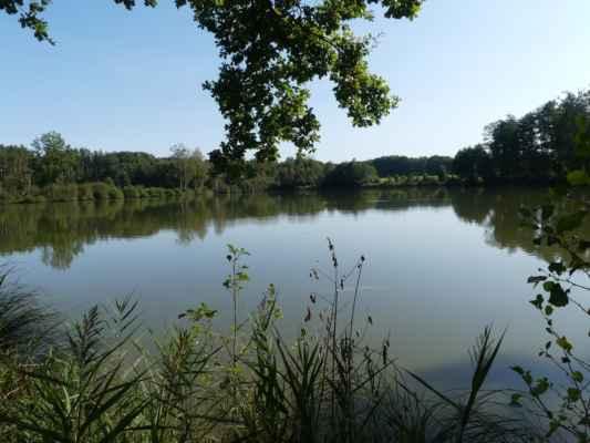 Ale podle té louky v pozadí - tohle je asi rybník Hluboký.