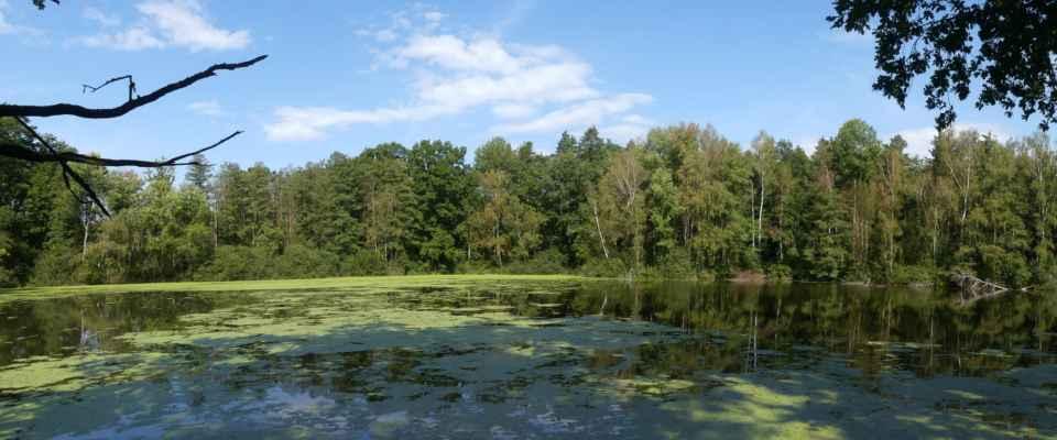 Rybník Malá Žabka.