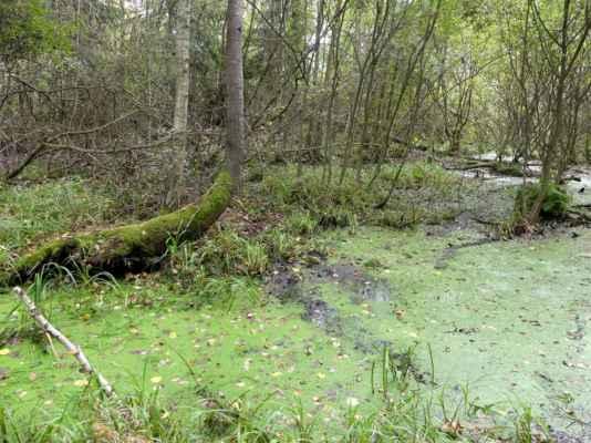 Mokřady mezi rybníky Velká Zahrádka, Humlena a Podsedek.