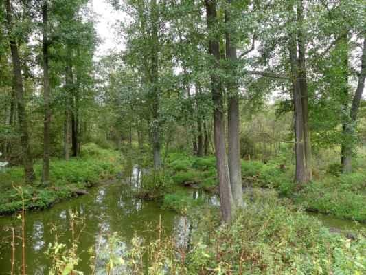 Na okraji národní přírodní rezervace Stará a Nová řeka.