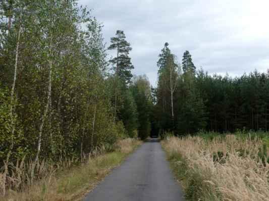 Opustily jsme hráze rybníků a jdeme po cyklostezce přes lesy. Je to cesta dost otravná a lesy nic moc.