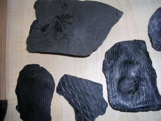 fosilie