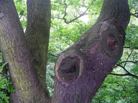 Ten strom se směje! :-)