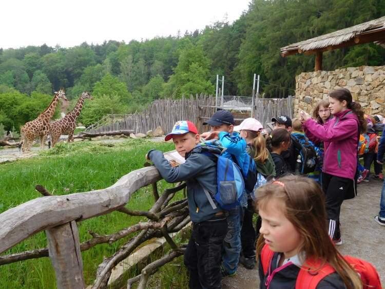 Zoo vkrabici